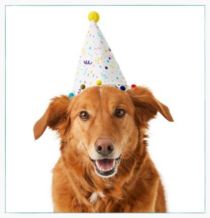 chien avec un chapeau d'anniversaire