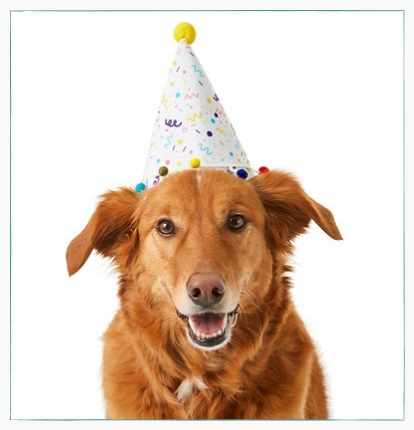 dog with a birthday hat